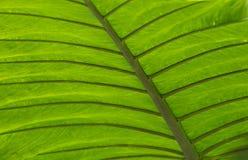 fredrick庭院meijer种植显耀热带 图库摄影
