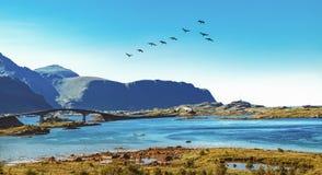 Fredvang桥梁在Lofoten群岛,挪威 免版税库存照片