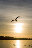 Free. My idea of liberty. A bird fly free in the sun Stock Image