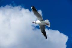 Free as a bird Royalty Free Stock Photos