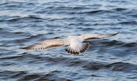 Free as a Bird Royalty Free Stock Images