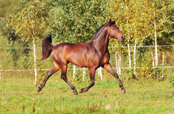 Free autumn horse Royalty Free Stock Photography
