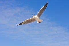 Free bird on blue sky Stock Images
