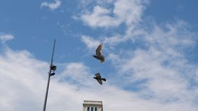 Free Birds Flying Over The City. Beautiful Birds Flying over the city Stock Photo