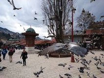 The free birds. Sarajevo spring 2017 Royalty Free Stock Photo