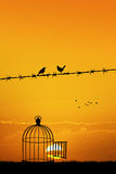 Free birds on wire Royalty Free Stock Photo