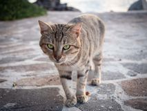 Tiger cat walking on the beach in Greece on sunset royalty free stock photography