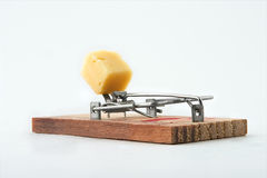 Free-of-charge cheese. Alert mousetrap on a white background Stock Photos