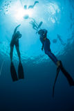 Free diver Stock Images