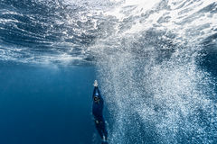 Free diver ascending from the depth Royalty Free Stock Photos
