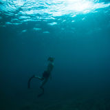 Free diver coming to surface. Young man coming to the surface from a deep free dive in the pacific ocean Royalty Free Stock Photos
