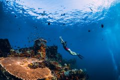 Free Free Diver Girl Swimming Underwater Over Wreck Ship. Royalty Free Stock Photography - 160433257