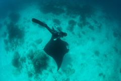 Free Diver and Manta Ray in Tropical Pacific Royalty Free Stock Photography