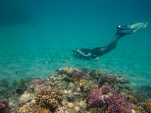 Free Diver in the Reef Stock Photography