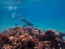 Free Diver in the Reef Stock Photos
