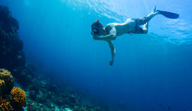 Free diver Stock Photography