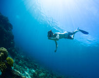 Free diver Stock Image
