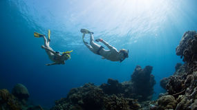 Free divers Stock Images