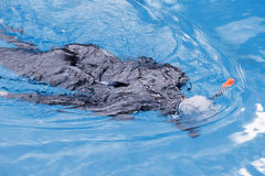 Free diving training on swimming pool Stock Photo