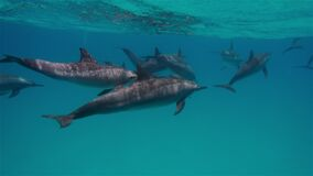 free dolphins deep underwater