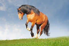 Free draft horse. In the summer field stock photos