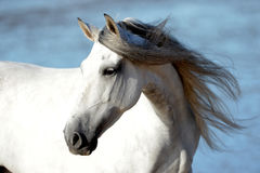 Free dressage on a spanish beach Royalty Free Stock Photo