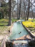 Free ducks swim in one of the channels of the Buen Retiro Park, Royalty Free Stock Photos