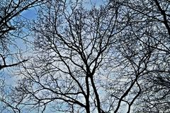 Free feeling trees. Trees and the blue sky Royalty Free Stock Photo