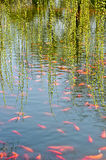 Fish pond. Free the fish swimming in the pond royalty free stock photography