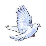 Free flying white dove, isolated sketch style illustration Royalty Free Stock Photography