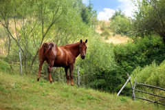 Free Grazing Horse Royalty Free Stock Photos