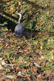 A free heron in the Parc Stock Photos