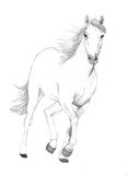 Free horse. A hand drawn white horse running Stock Photos