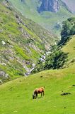 Free horse eating grass in the pyrenees mountains Stock Photography
