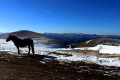 Free horse in a snowy backround Stock Photography
