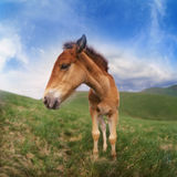 Free horse Royalty Free Stock Photography