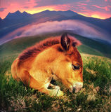 Free horse Stock Images