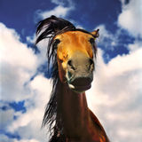 Free horse Royalty Free Stock Images