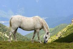 Free horse Stock Photos