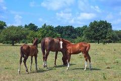 Free horses. Shoot horses near my city Stock Images
