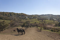 Free horses Stock Photography