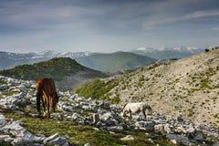 Free horses grazing Stock Photos