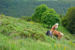 Free Horses in the hills. Royalty Free Stock Photography