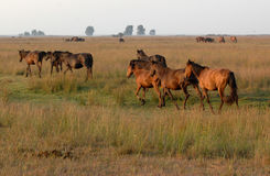 Free Horses Royalty Free Stock Images