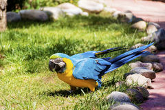 Free macaw parrot Stock Photography