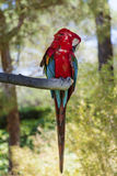 Free macaw parrot sitting on a tree in the park. Red macaw parrot sitting on a tree in the zoo in Marineland ,Spain Stock Photo
