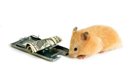 Free money is only in a mousetrap Stock Image