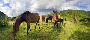 Free mountain grazing horses Stock Photos