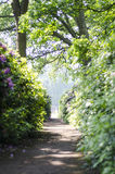 Free path trough the woods Stock Images