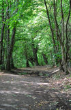 Free path in the woods Royalty Free Stock Image